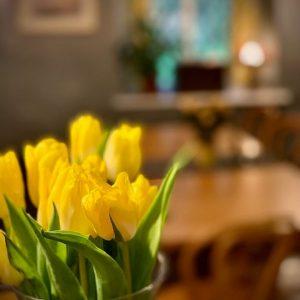 daffodils-2020-refurb