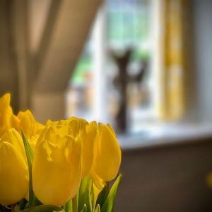 daffodils-near-window-2020-refurb